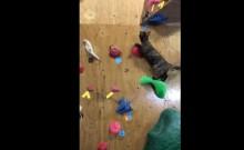 Video del día