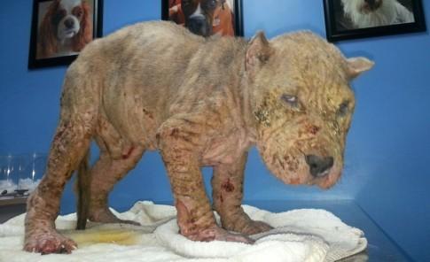Así se ve el dolor de los animales abandonados