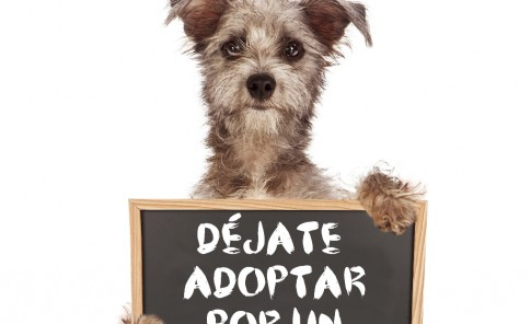 Déjate adoptar por un animal