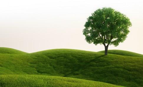 Ecosia: UN BUSCADOR VERDE