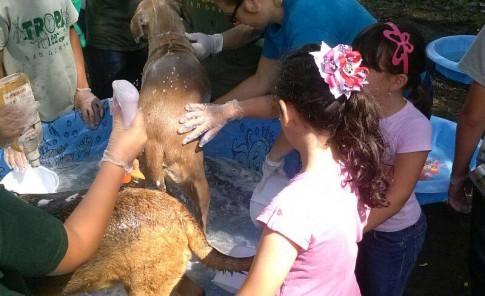Bañatón en el Santuario de Animales San Francisco de Asís