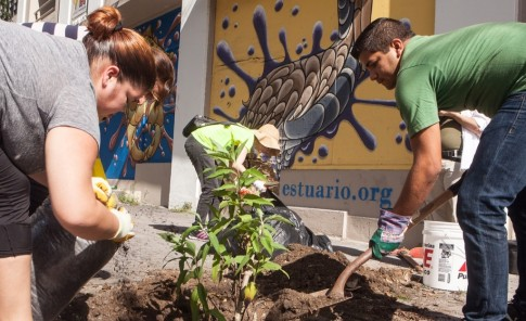 Jardines verticales revitalizan  Santurce
