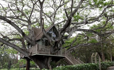 La casa de árbol se construyó hace más de 20 años.