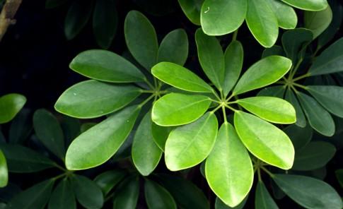 El uso de las plantas ornamentales