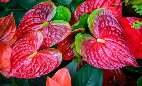 El uso de las plantas ornamentales 2