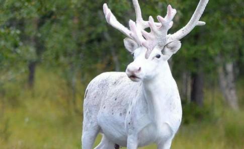 10 animales albinos que sin duda te sorprenderán