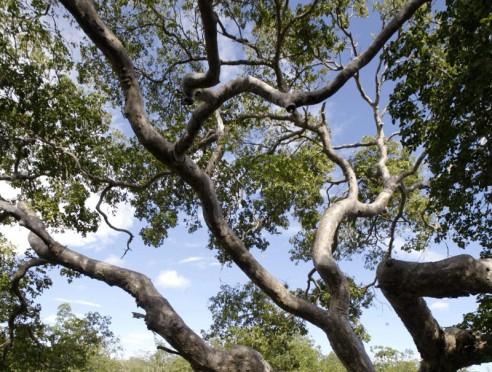 Bosque Seco de Guánica