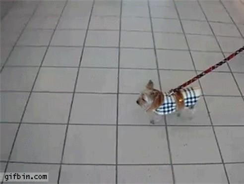 Perro y maleta