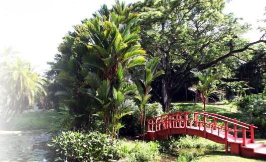 Cumple el jard n bot nico for Bodas en el jardin botanico de rio piedras