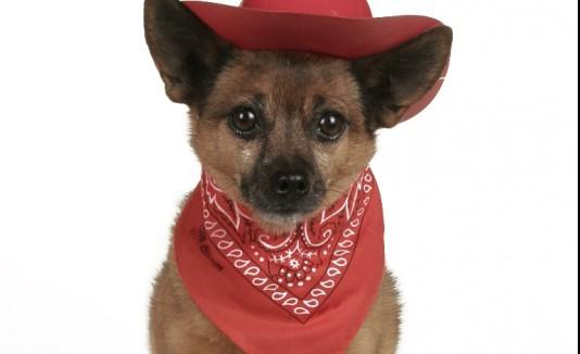 D a nacional del perro en caguas for Actividad de perros en el jardin botanico de caguas