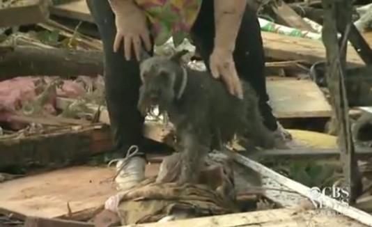 Mujer encuentra a su perro