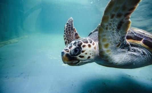 Tortuga, mar, animales marinos