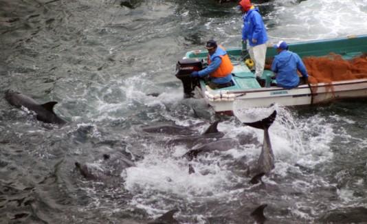 delfines japón