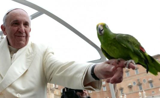 Papa y el loro