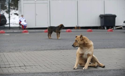 Matan a perros callejeros en Sochi