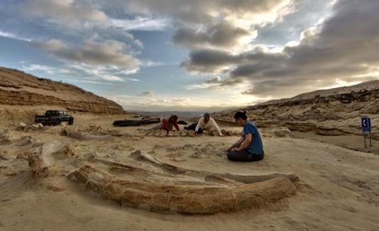 desierto de ballenas Atacama