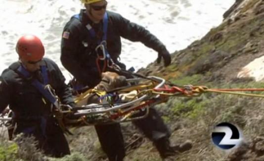 Rescatan perrita de acantilado