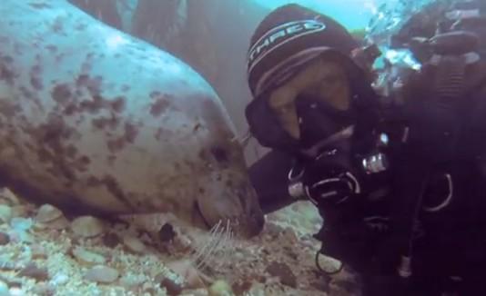 Selfie con una foca