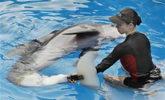 Delfín biónico