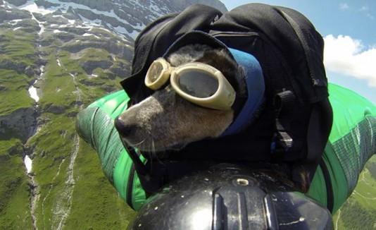 Perro en paracaídas
