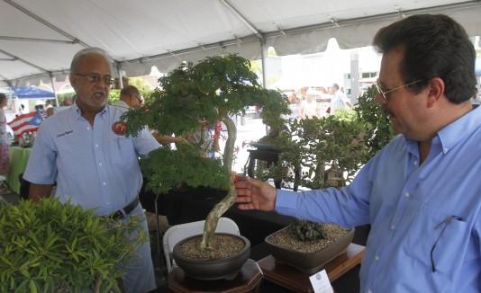 Exhibiciones de  bonsáis formaron parte de la oferta de los artesanos.