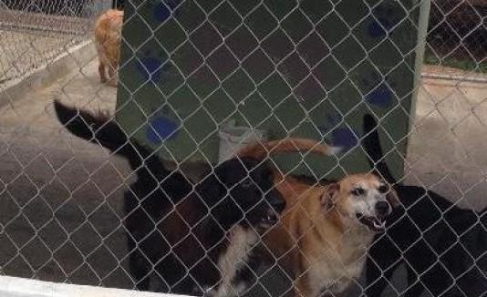 La Oficina  de Manejo de Emergencias Municipal  de Guayama  recoge cerca de 100 perros realengos todos los meses.