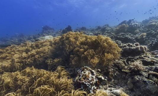 Océano en 360
