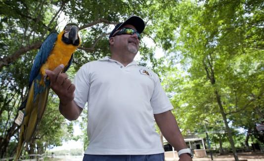 Raúl Vega, propietario del potrero Brisas del Mar en Camuy, posa con la cotorra Lola, quien es famosa entre los visitantes.