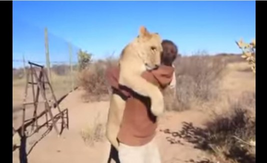 Leona abraza a hombre