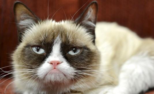 Lo que no sabías de Grumpy Cat