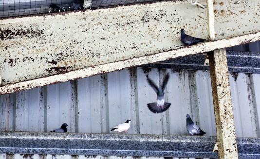 La cancha  de la comunidad Juan Martín Adentro es usada como hogar por palomas y murciélagos.