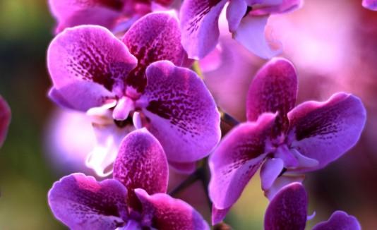 Los asistentes podrán comprar diferentes clases de  orquídeas.