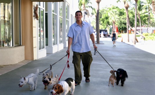 Asegúrate de que tu mascota tenga una cadena apropiada para el paseo, y nunca salgas de la casa sin su collar con su identificación.