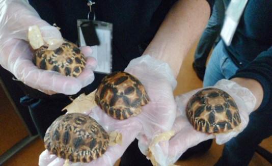 Tortugas de Madagascar