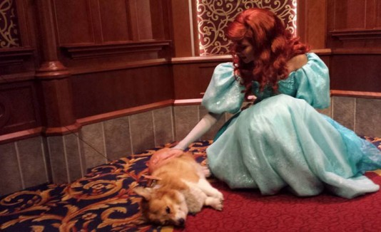 FOTOS: Perrito va Disney y el resultado es mágico
