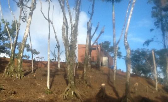 Hace varias semanas se realizó una deforestación en una zona boscosa del  sector Mundo Tropical en Fajardo.