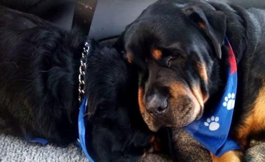 Los perros hermanos Brutus y Hank.