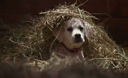 Perro anuncio budweiser
