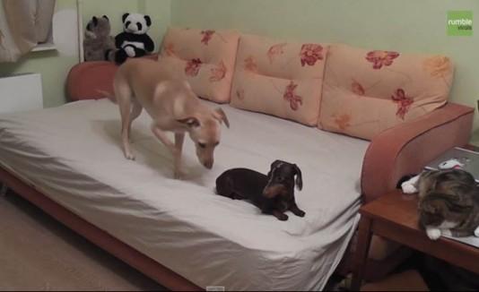Dos perros y un gato sólos en una casa.