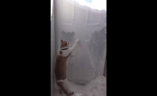 Gato escarbando la nieve.