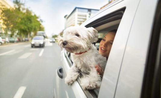 Perro disfrutando de un viaje en vehículo.