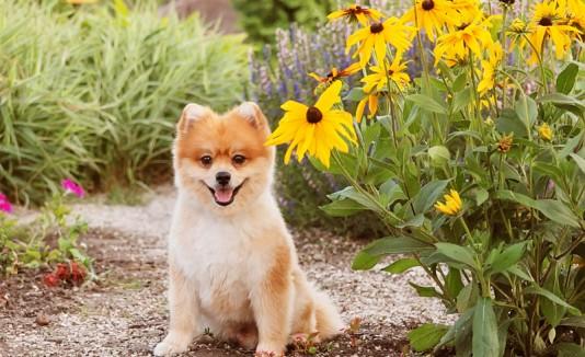 Perro al lado de unas flores.