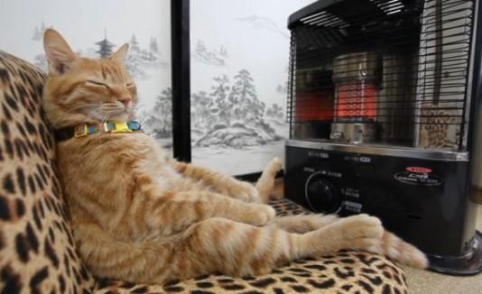Gato sentado frente a un calentador