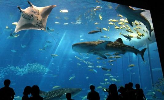 Tiburones y mantarraya