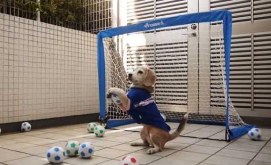 Purin el perro futbolista