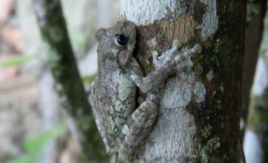 Documental animales Caribe peligro extinción