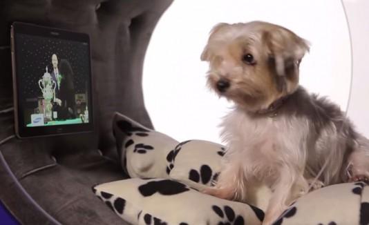 Casa inteligente para perros