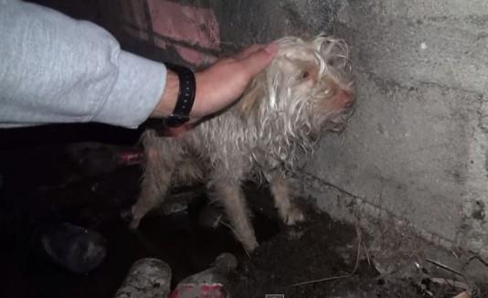 Perro rescatado Bitty