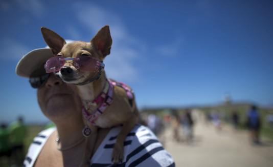 El Morro Pet Fest