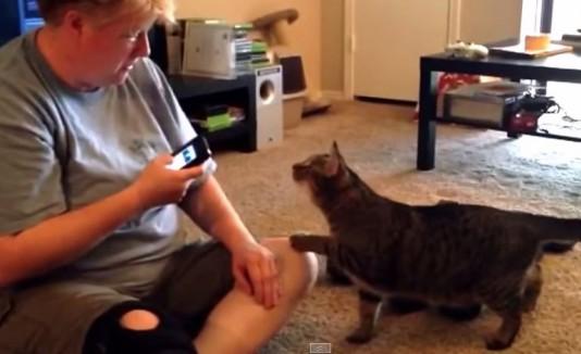 Gato ataca